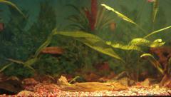 Aquarium fish long shot. Aquarium On Background Of The Window Stock Footage