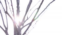 Bokeh Tree Background Stock Footage