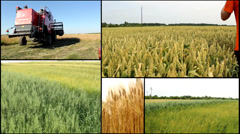 Combine harvest .oats.wheat ,barley ,grain...agriculture field multi screen Stock Footage