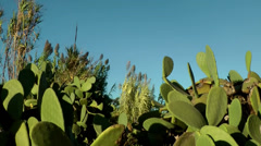 Europe Spain Balearic Ibiza coves and landscapes 115 reed and cactus Stock Footage