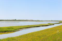 dutch wadden island texel - stock photo