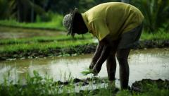 Bali paddy fields – farmer - stock footage