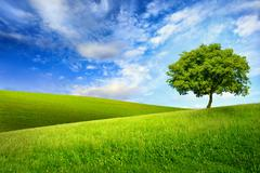 single tree on top of a green hill - stock photo