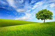 Stock Photo of single tree on top of a green hill