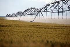 Wheat irrigation Stock Photos