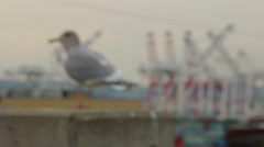 Seagull at Port of Seattle Stock Footage