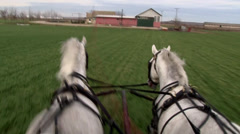 Horses running meadow Stock Footage