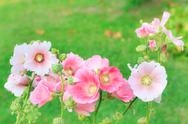 Stock Photo of beautiful pink flower in garden