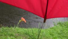 Summer rain on pond and red umbrella Stock Footage