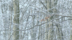 Ice and Snow on Tree Branches 6 Stock Footage