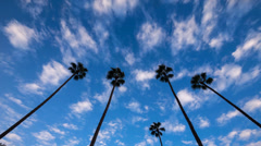 Palm trees against moving clouds over blue sky background. 4K Timelapse. Stock Footage