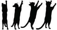 Stock Illustration of eps 10 vector collection of cats silhouettes....