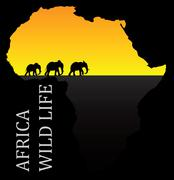 eps 10 set of editable vector silhouettes of african elephants in walk poses - stock illustration