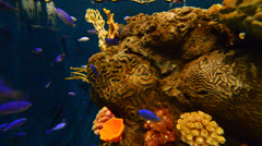 Colorful coral reef with hard corals at the bottom of tropical sea Stock Footage
