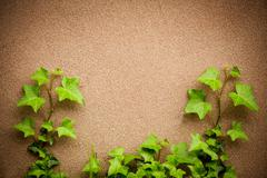 Leaves of hedera helix ivy and wall background Stock Photos