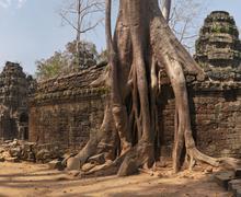 ta prohm, temple at angkor, cambodia - stock photo