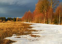 Melting snow in early spring Stock Photos