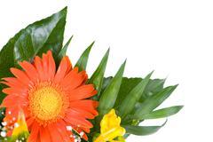 wedding flowers freesia and gerbera daisy - stock photo