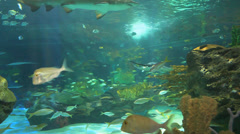 Large sharks in a coral reef - stock footage