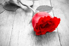 Stock Photo of rose on  wooden floor