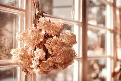 Hortensia old dried bouquet hang in window Stock Photos