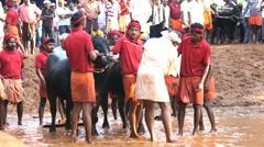 Local people buffalo racing Karnataka, India, Asia Stock Footage
