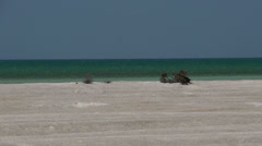 Zoom out from Shell Beach in the Shark Bay National Park, Western Australia Stock Footage