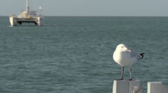 Gull flying away in slow motion with sailboat at the background Stock Footage