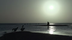 People and Pelicans on the beach during sunrise Stock Footage