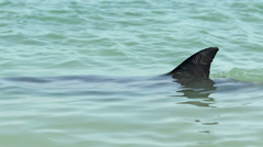 Close up dolphin fin in Monkey Mia SharkBay National Park - stock footage