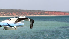 Pelican flying in slow motion with boats at the background Stock Footage
