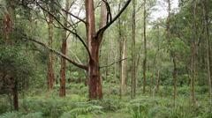 Australian 'Bush' Landscape Stock Footage