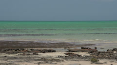 Pan from Modern stromatolites landscape and the sea in SharkBay National Park Stock Footage