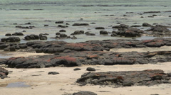 Close up from Modern stromatolites landscape in SharkBay National Park Stock Footage