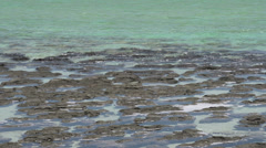 Close up from Modern stromatolites in the water in SharkBay National Park Stock Footage