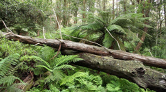 Rainforest - Australian Landscape - stock footage