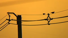 Birds Sitting On Power Lines Stock Footage
