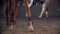 Horses Hooves Walking in Slow Motion Stock Footage