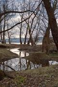 Stock Photo of flooded forest