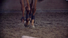 Detail Shoot On Horse Hooves Walking Slow Motion Stock Footage