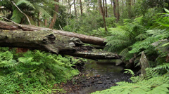 Rainforest - Australian Landscape Stock Footage