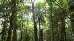 Rainforest Trees - Australian Landscape Stock Footage