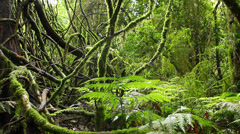 Tree Vines - Rainforest - Australian Landscape - stock footage