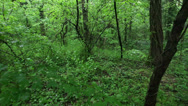 Stock Video Footage of Spooky forest