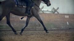 Dark Brown Horse Walking In Slow Motion - stock footage