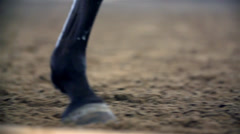 Horse Hooves Close Up Slow Motion Stock Footage