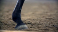 Stock Video Footage of Horse Hooves Close Up Slow Motion