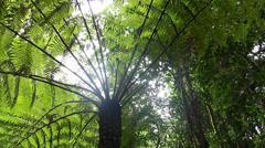 Tree Fern Rainforest - Australian Landscape - stock footage