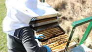 Stock Video Footage of Beekeeper work .. Bees And Hives ,bees in apiary,beehive,