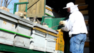 Stock Video Footage of Beekeeper work ...Bees And Hives ,bees in apiary,beehive,Beekeeper